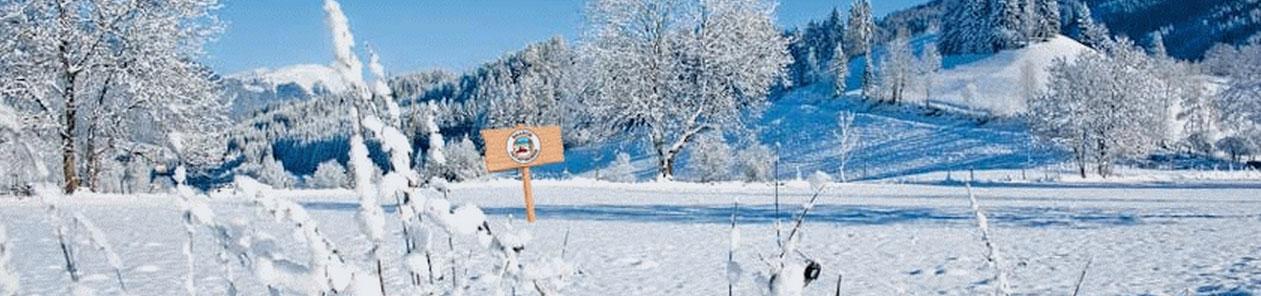 snow-pano